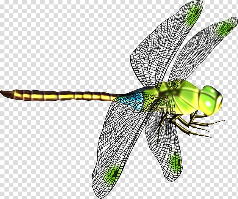 Green and black art. Dragonfly clipart beautiful dragonfly
