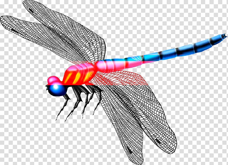 Mosquito insect butterfly . Dragonfly clipart beautiful dragonfly
