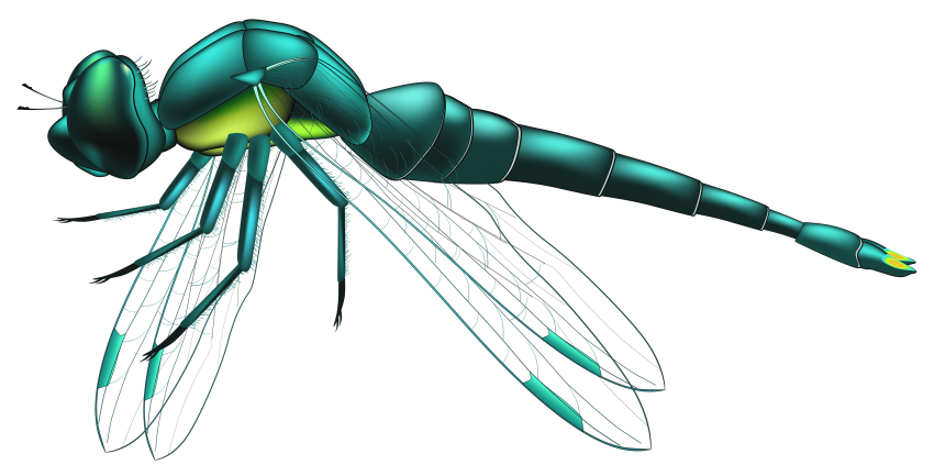Dragonfly clipart colored. Blue png free images