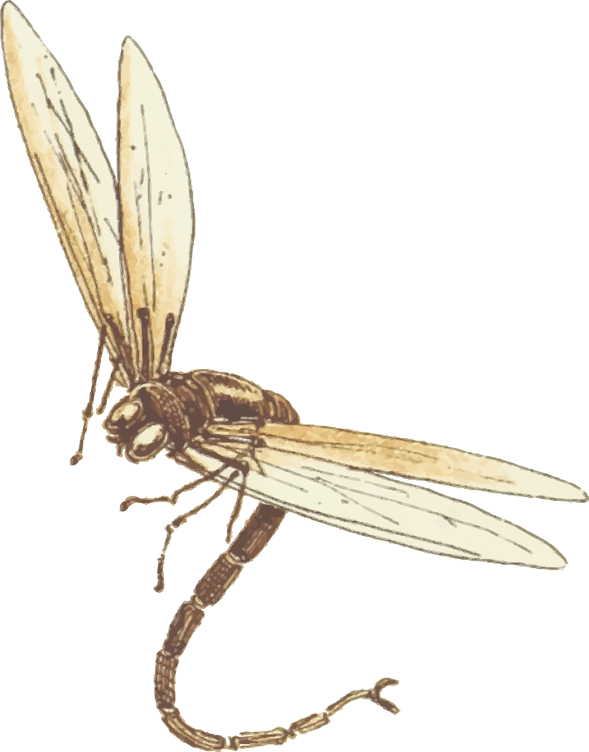 Dragonfly clipart colored. Icons png free and