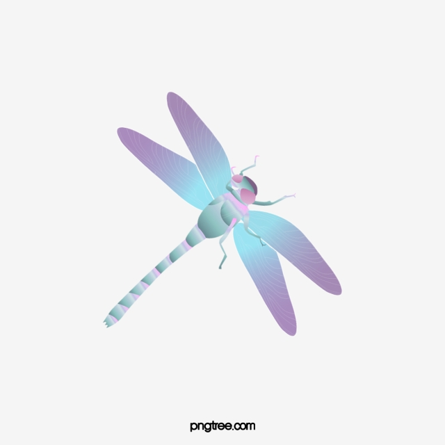 Color png transparent . Dragonfly clipart colored