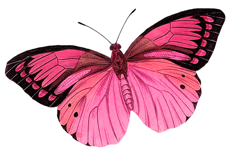 google search pinterest. Dragonfly clipart copyright free