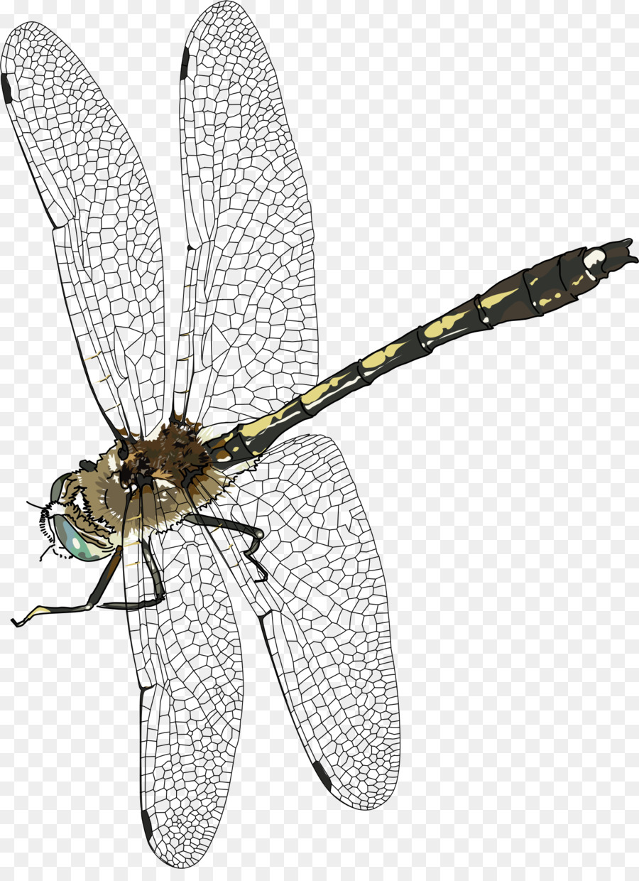 Dragonfly clipart creative. Png a wing