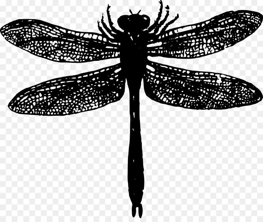Butterfly black and white. Dragonfly clipart creative
