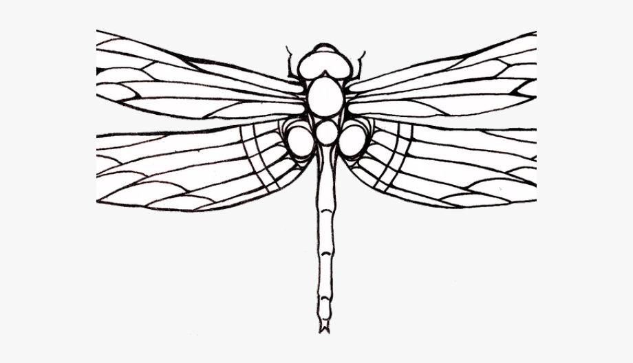 Tattoos outline free . Dragonfly clipart dragonfly tattoo