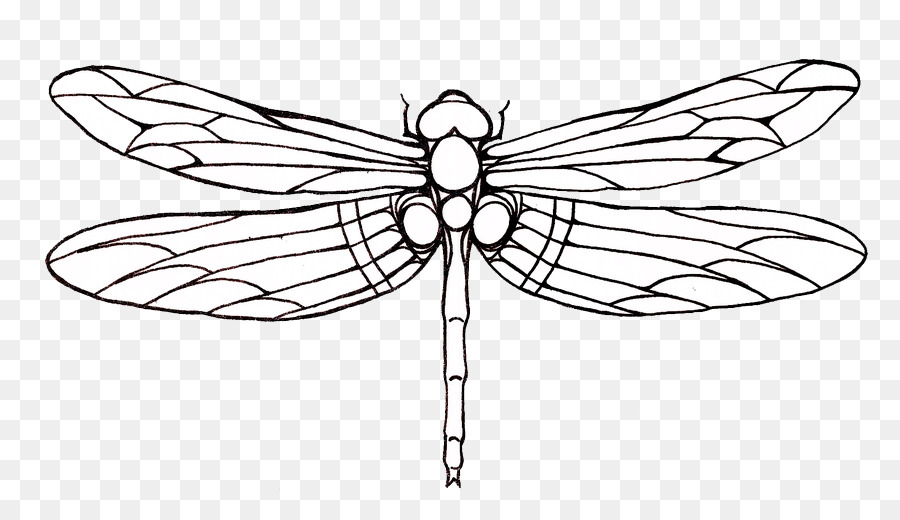 Drawing clip art drag. Dragonfly clipart dragonfly tattoo
