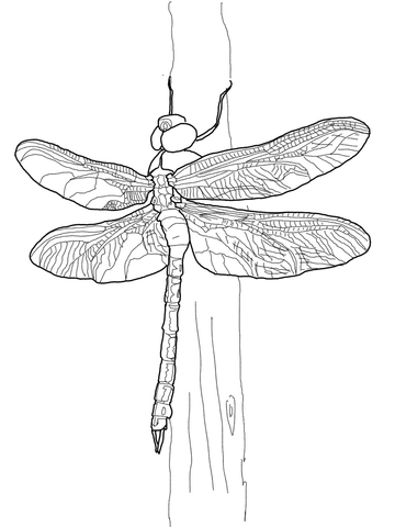 Dragonfly clipart green darner. Coloring page free printable
