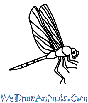 How to draw a. Dragonfly clipart green darner