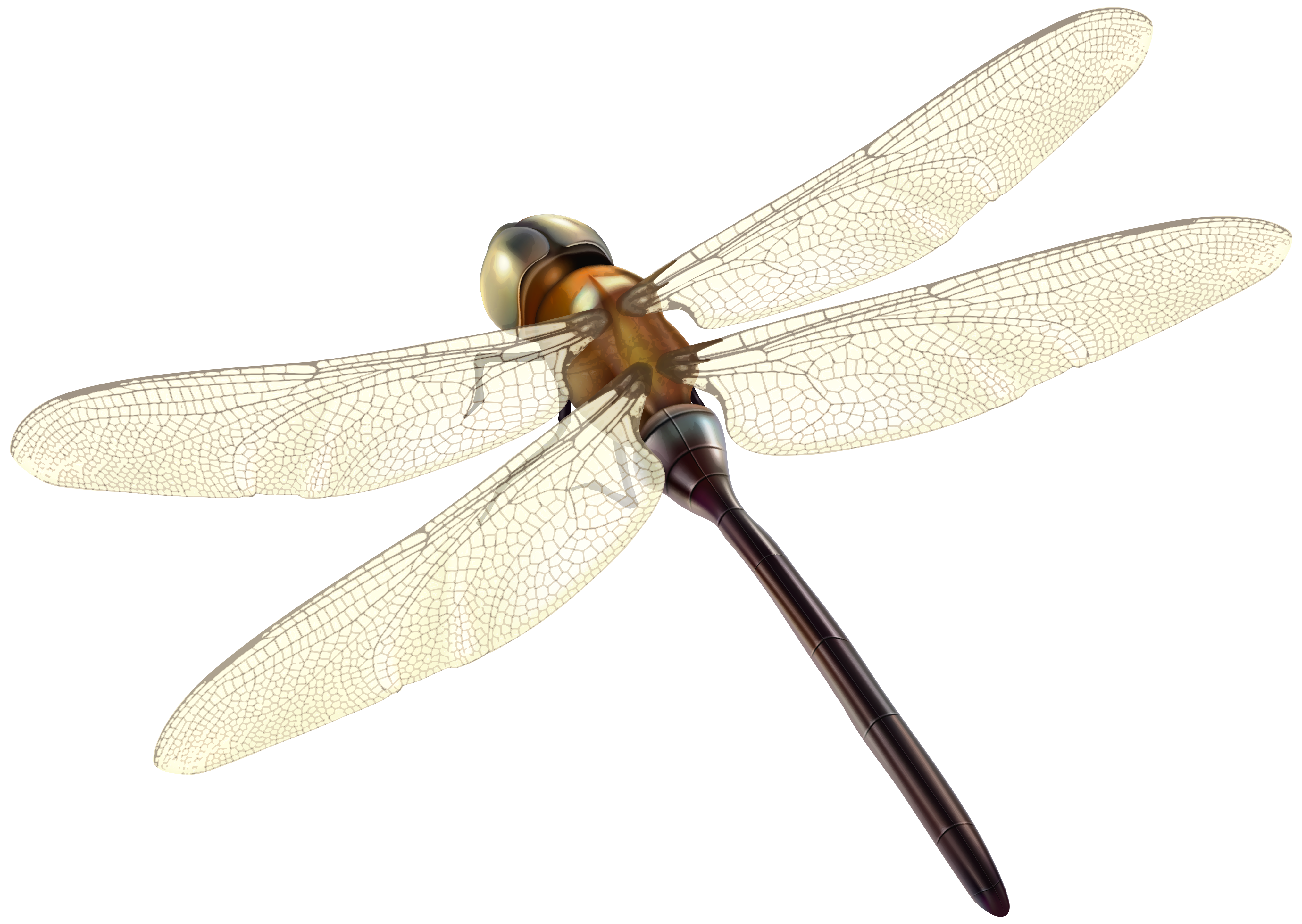 Dragonfly clipart insect. Png best web