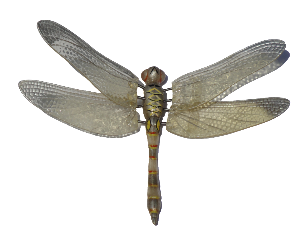 May clipart dragonfly. Png image purepng free