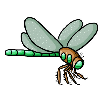 Free download images . Dragonfly clipart jpeg