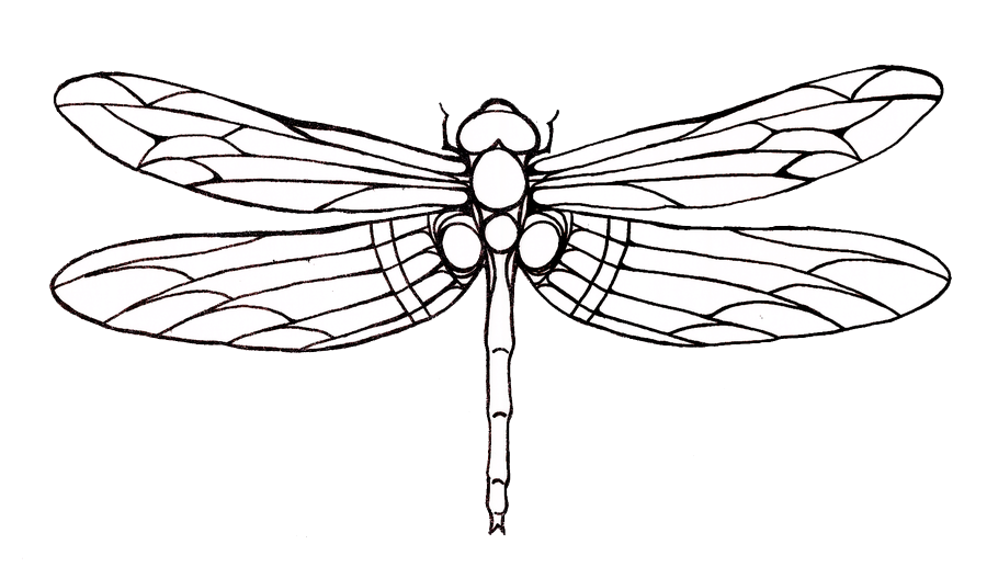 Drawn transparent pencil and. Dragonfly clipart mothers day