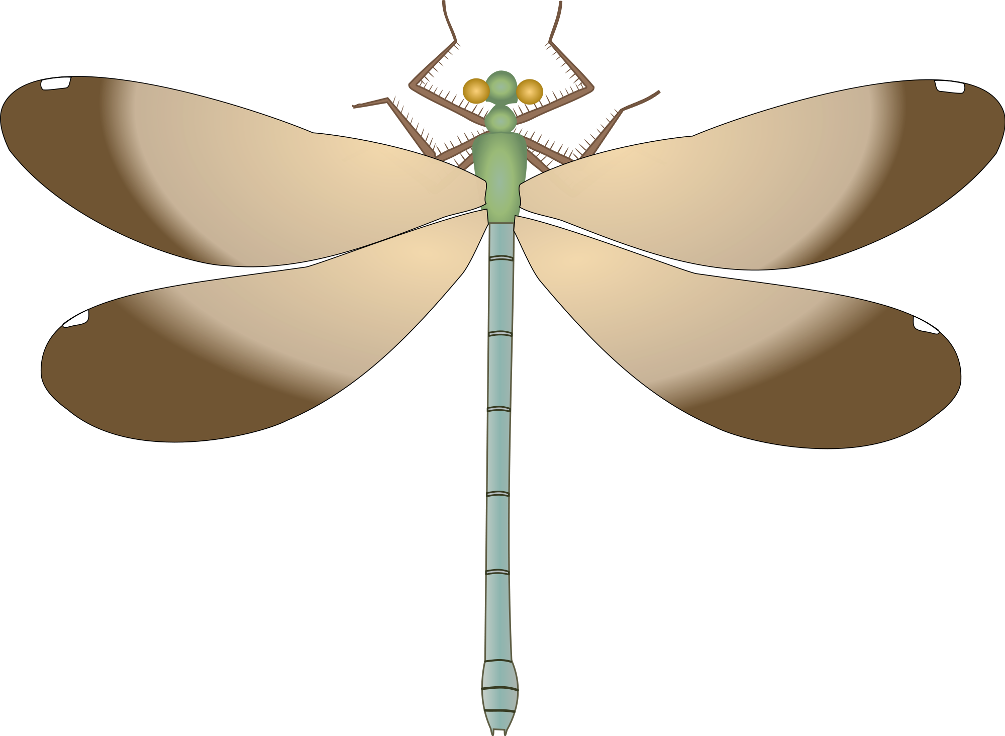 Dragonfly clipart patriotic. File calopteryx maculata wingveins