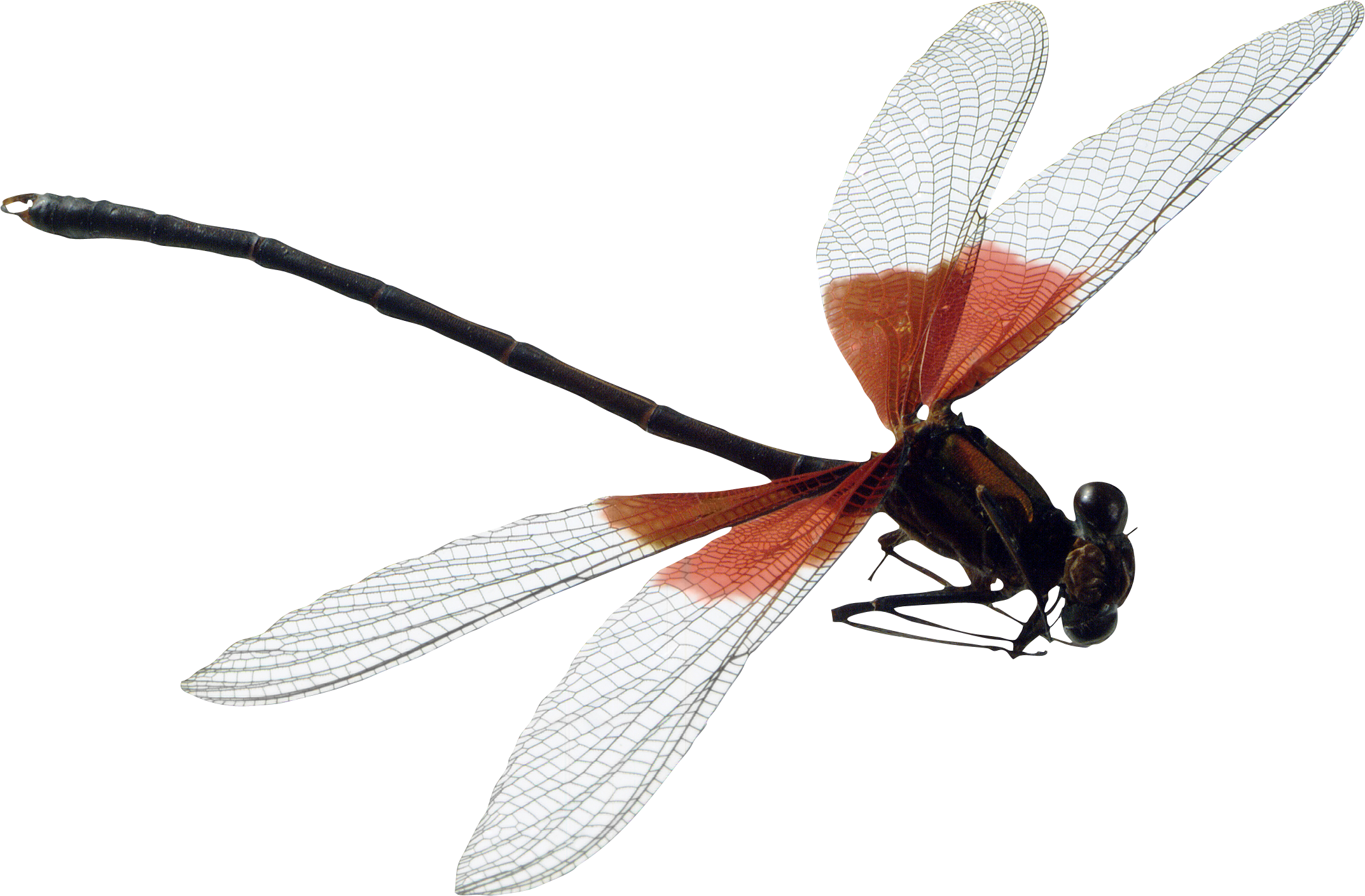 May clipart dragonfly. Transparent background free on