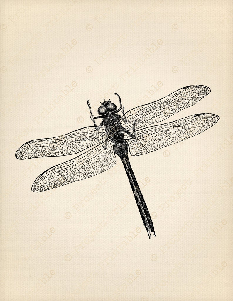 Digital download instant iron. Dragonfly clipart printable