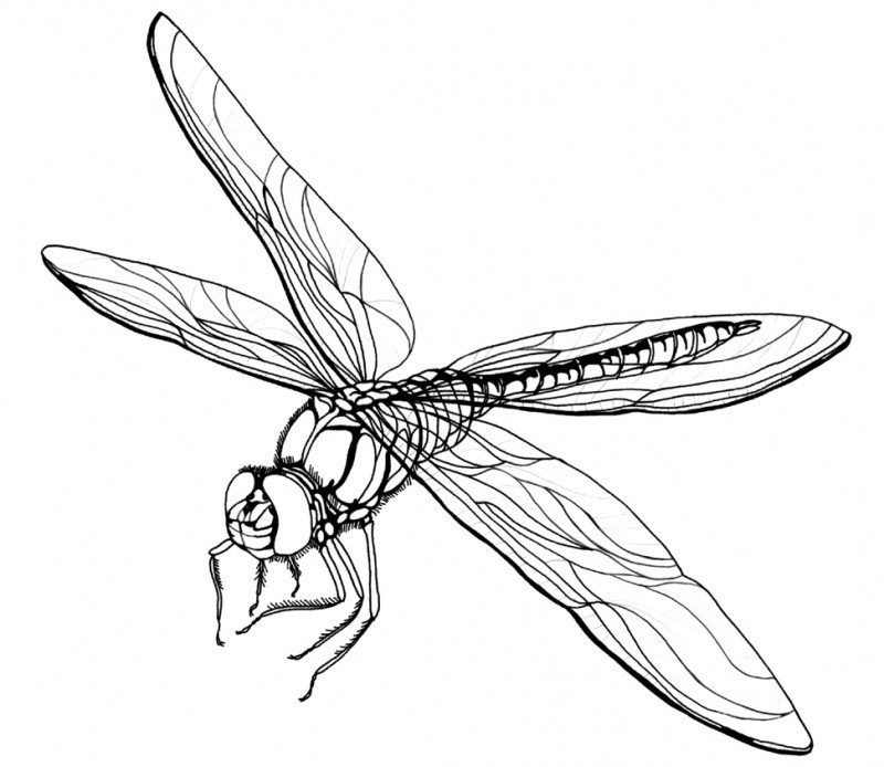 Free cartoon pictures download. Dragonfly clipart realistic
