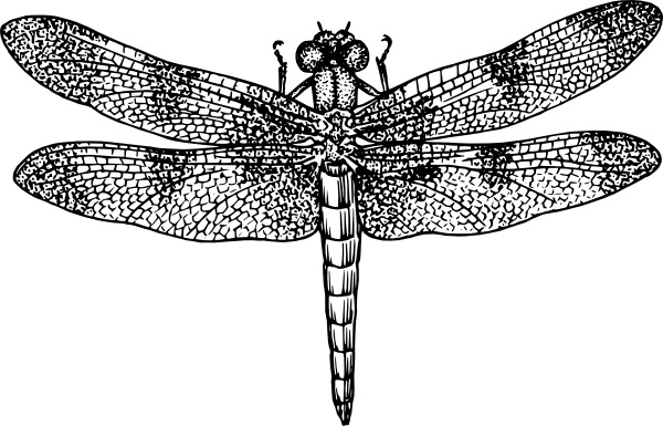 Dragonfly clipart realistic. Clip art free vector