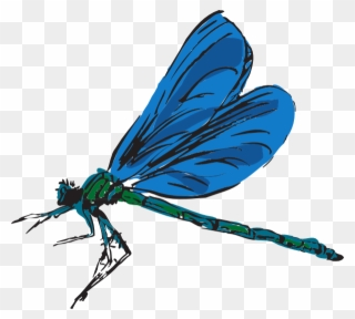 Dragonfly clipart realistic. Free png clip art