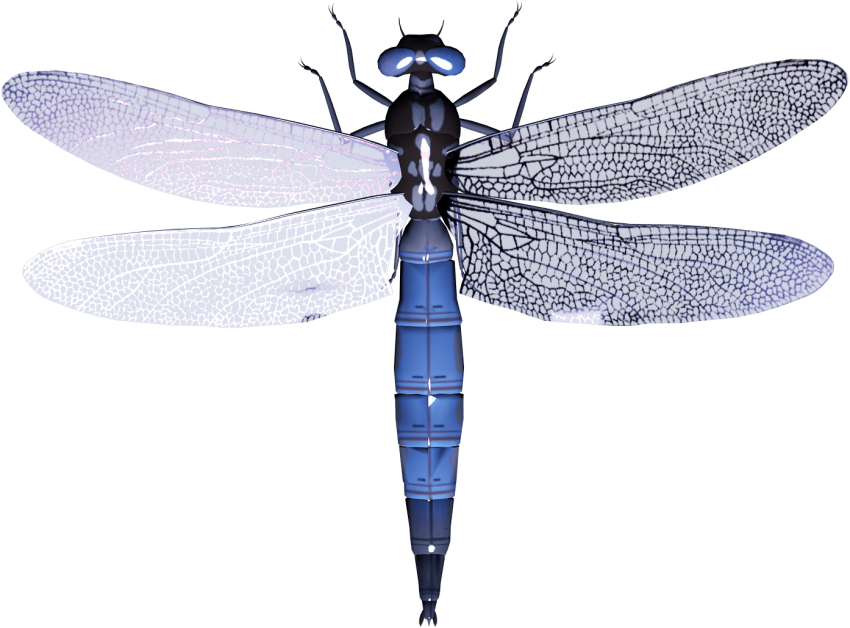 Dragonfly clipart red dragonfly. Png free images toppng