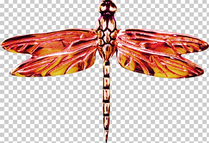 Dragonfly clipart red dragonfly. Butterfly icon png animal
