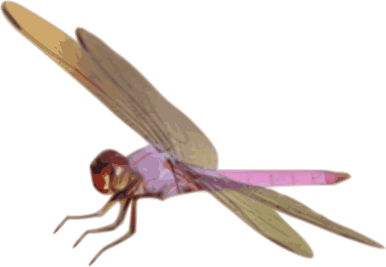 Dragonfly clipart royalty free.