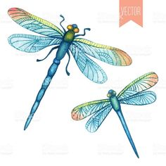 best images dragon. Dragonfly clipart summer