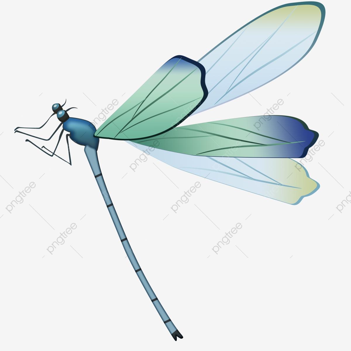 Cartoon vacation great heat. Dragonfly clipart summer