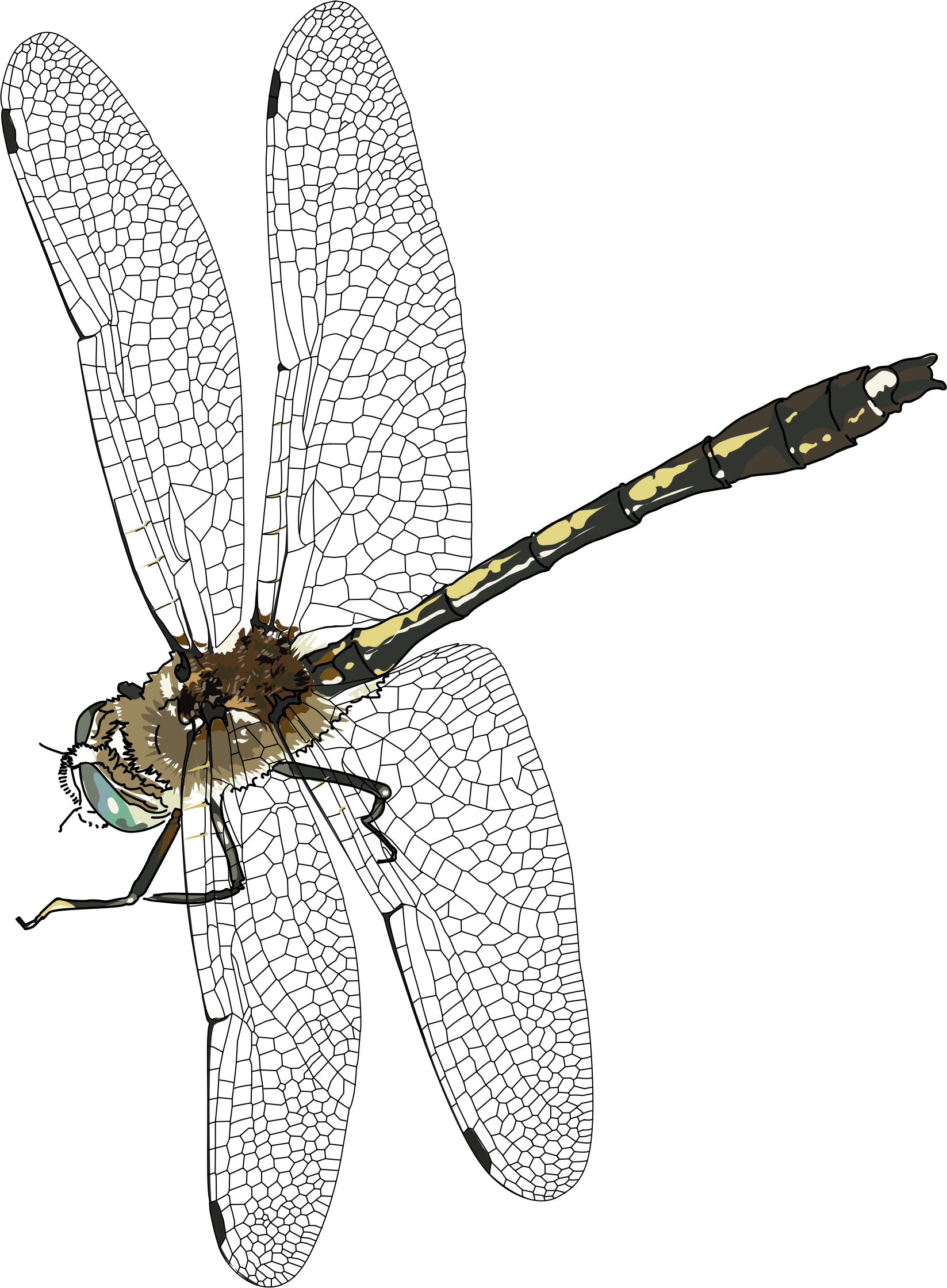 Transparent background png mart. Insects clipart dragonfly