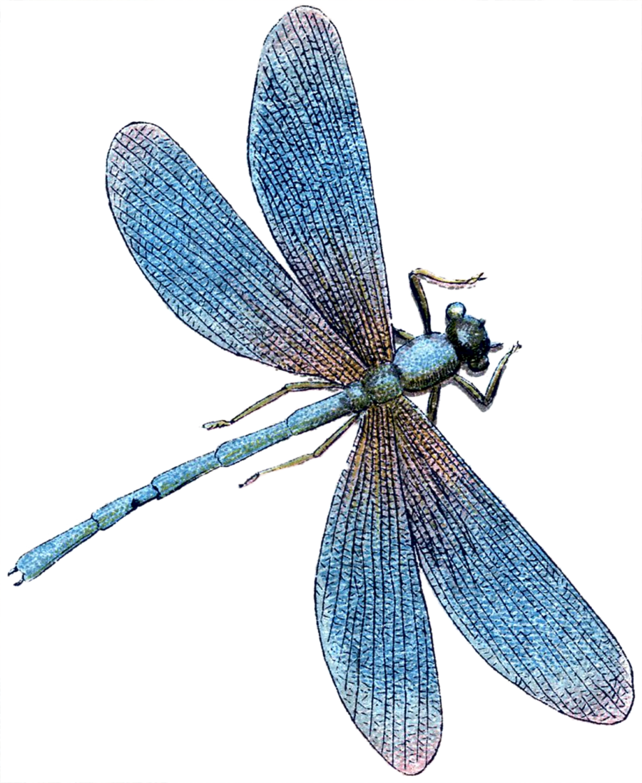 Tile . Dragonfly clipart turquoise