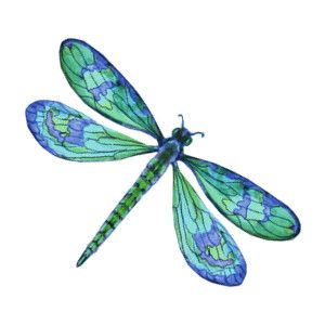 Dragonfly clipart turquoise. Vector art clip decorative