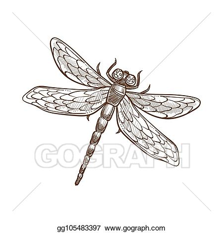 Dragonfly clipart two. Vector art fast flying