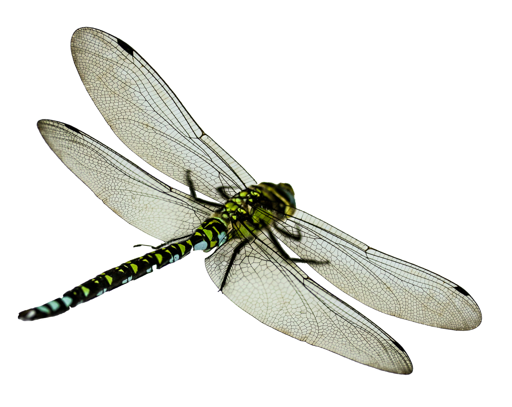 Png . Dragonfly clipart two
