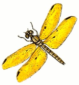 Dragonfly clipart yellow dragonfly. Clip art stock images