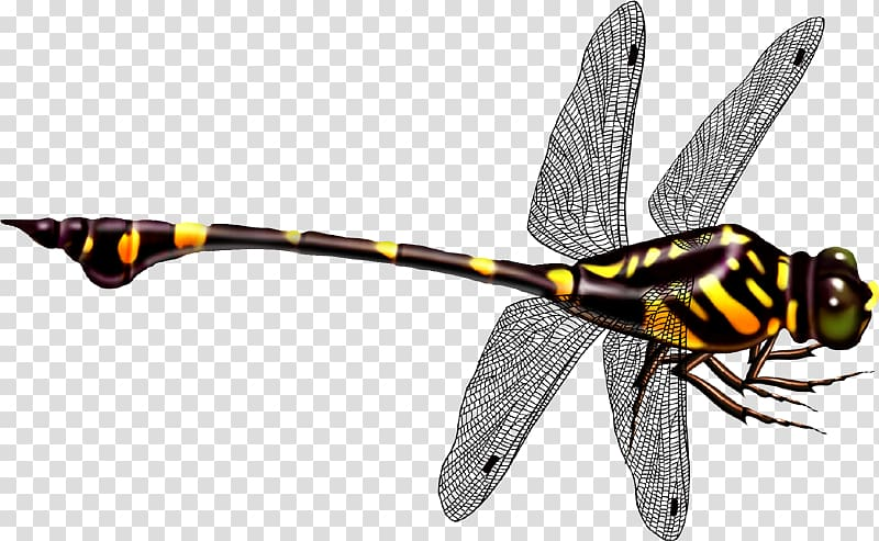 Black and illustration icon. Dragonfly clipart yellow dragonfly