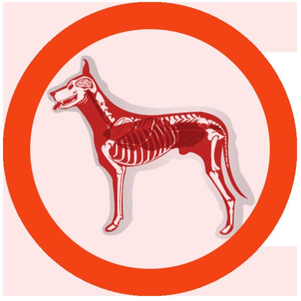 Pets clipart dog bone. Sheba paper darts