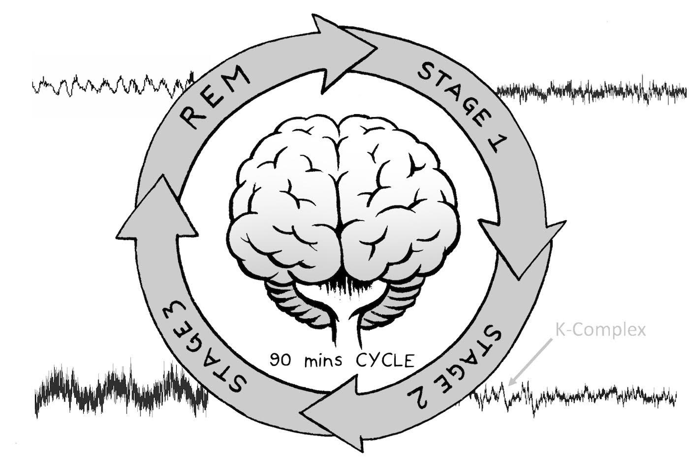 Experiment sleep . Dreams clipart sleepy brain