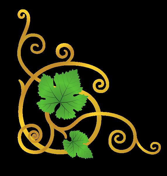 Vines clipart green. Transparent vine element png