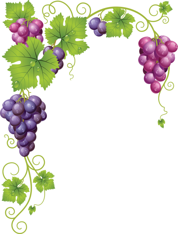 Grape clipart grape plant. Common vine wine clip