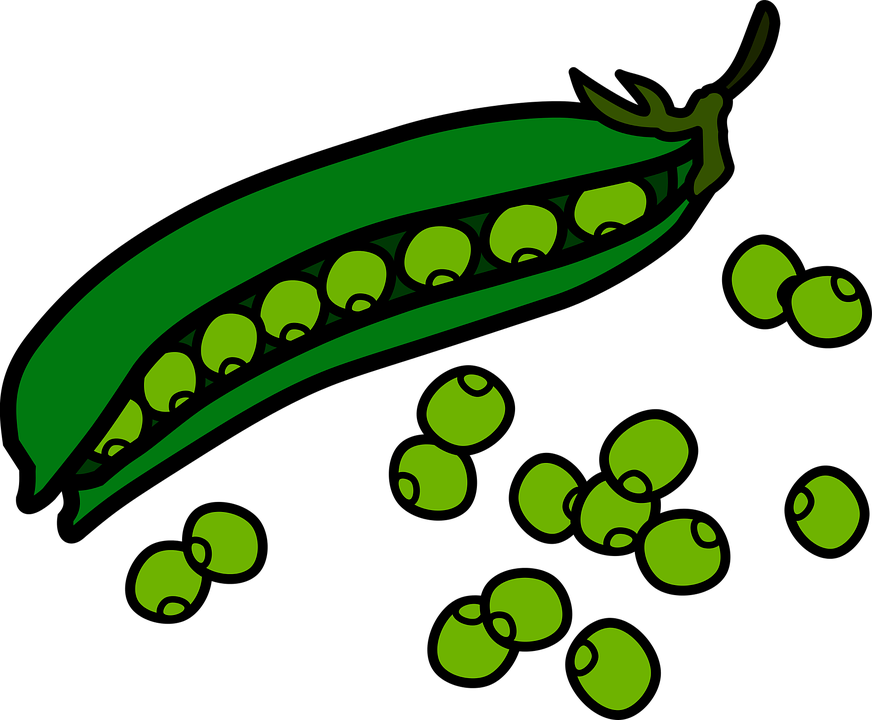 Pea pencil and in. Drinks clipart animated