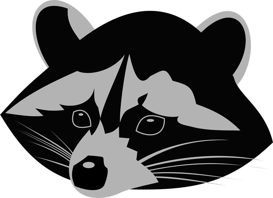 Drinking raccoons clipground raccoon. Drinks clipart animated