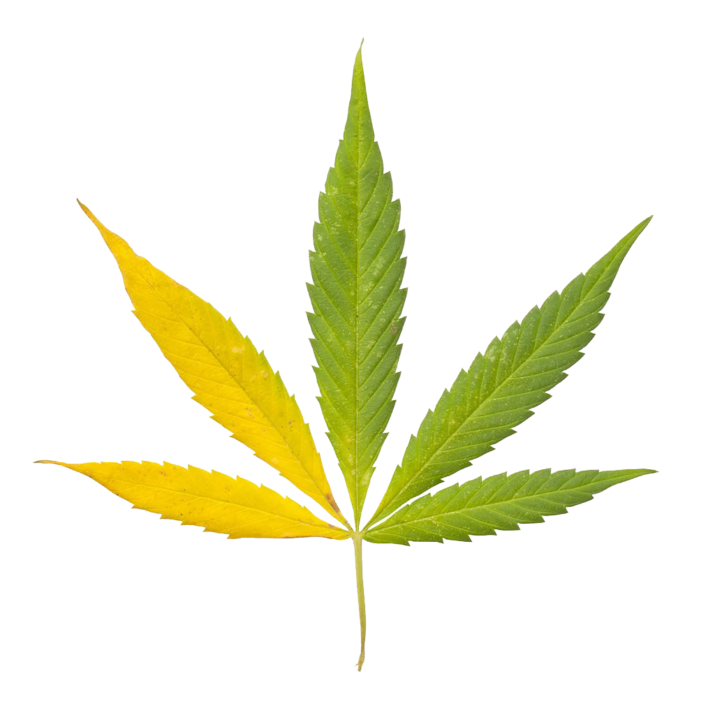 Marijuana clipart hemp. Cannabis sativa leaf bong