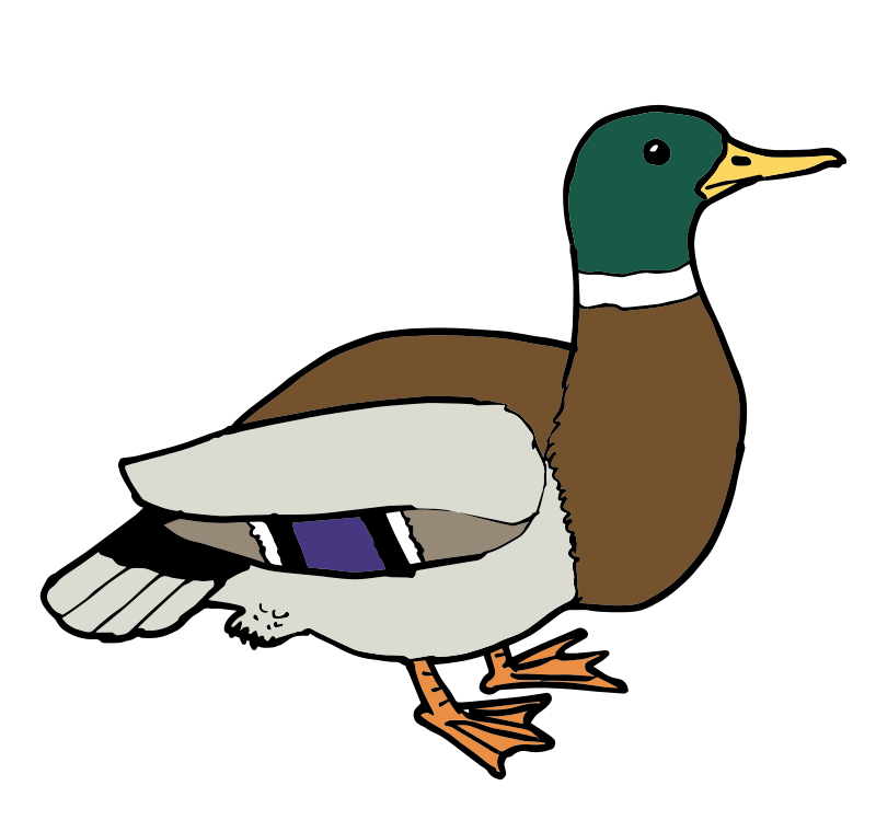 Duck clipart. At getdrawings com free