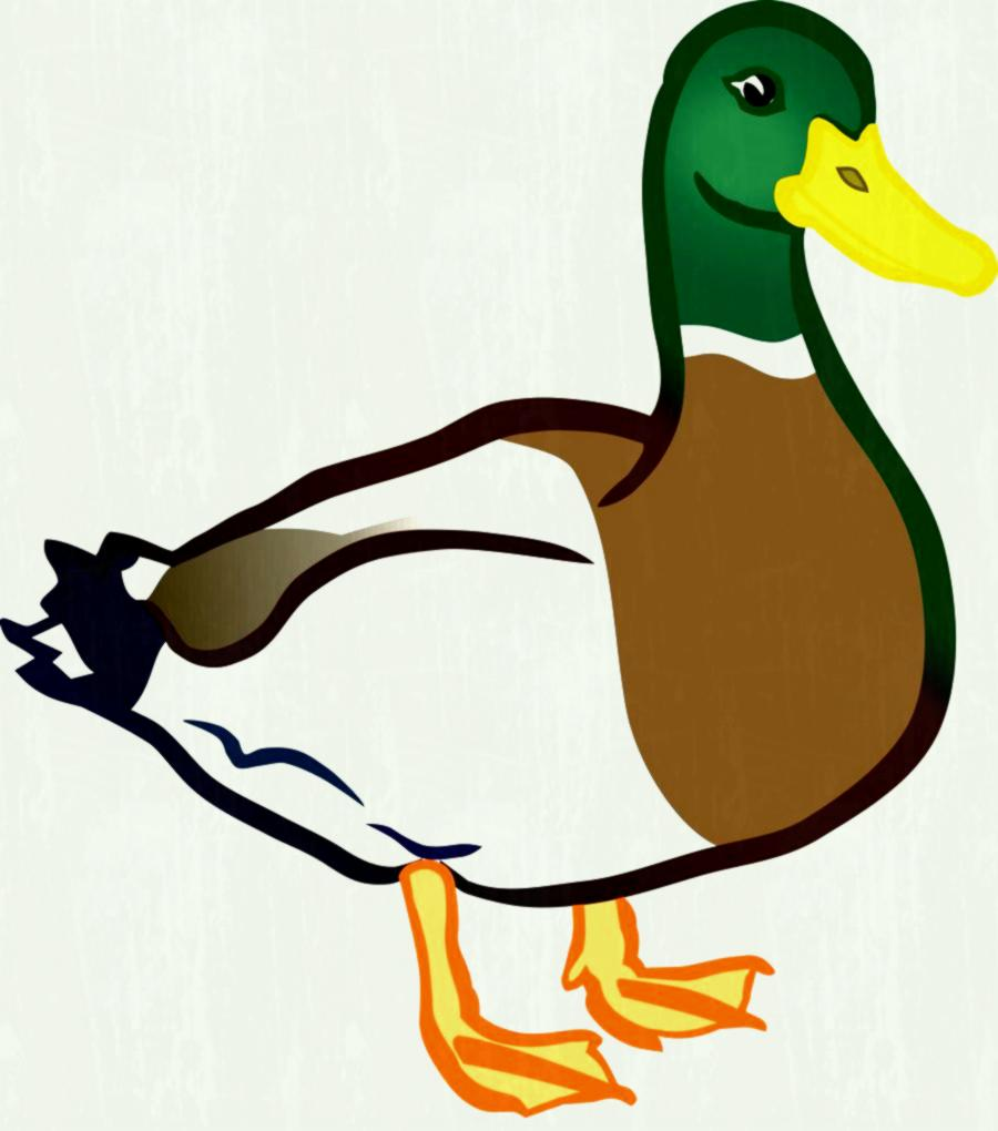Ducks free alternative design. Duck clipart