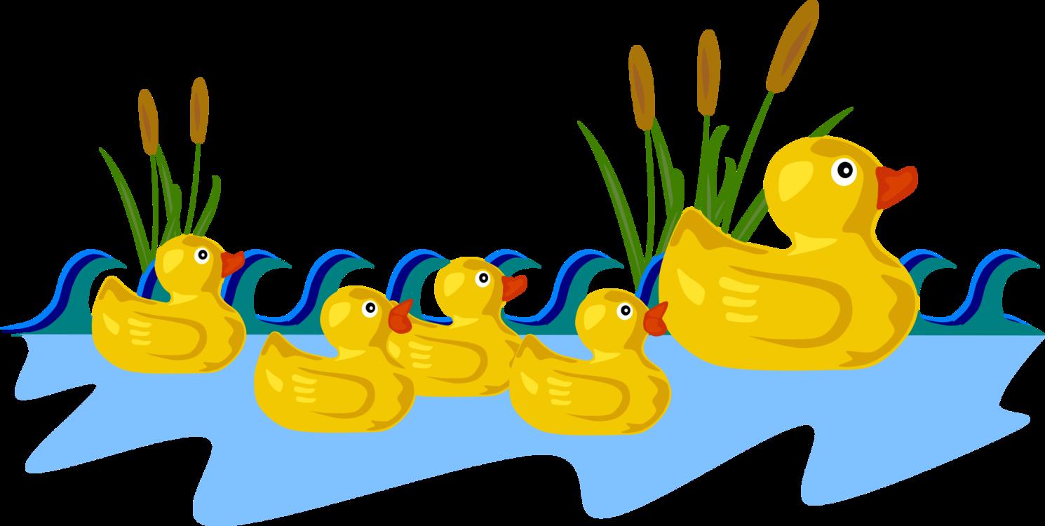 Ducks clipart five. Poultry water bird livestock