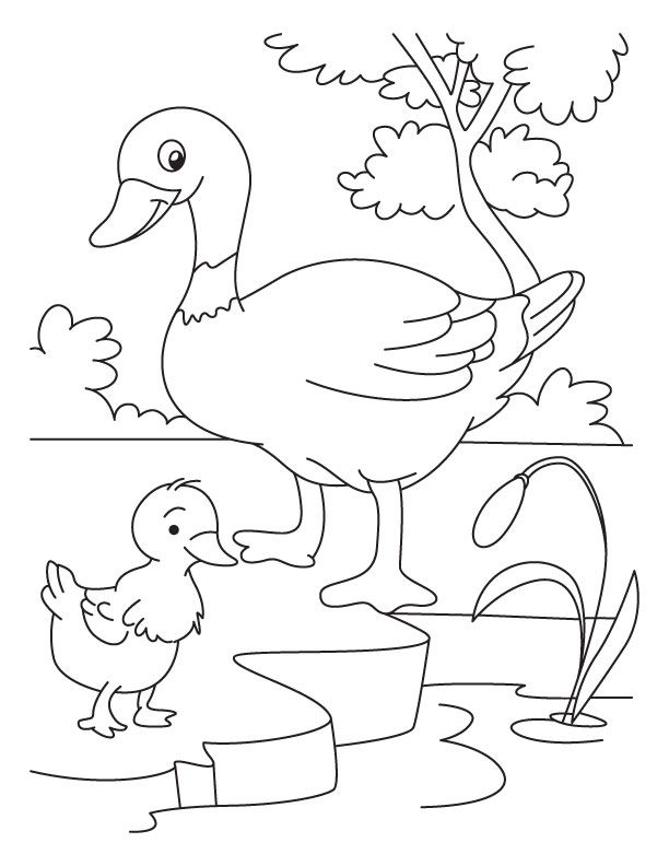 Duckling clipart duck leg. And coloring page quilt