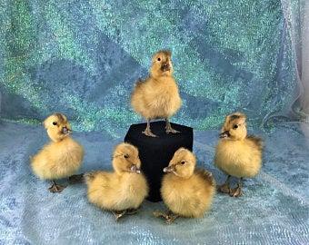 Duckling clipart duck leg. Etsy