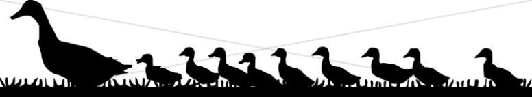 And ducklings wildlife . Duckling clipart mama duck