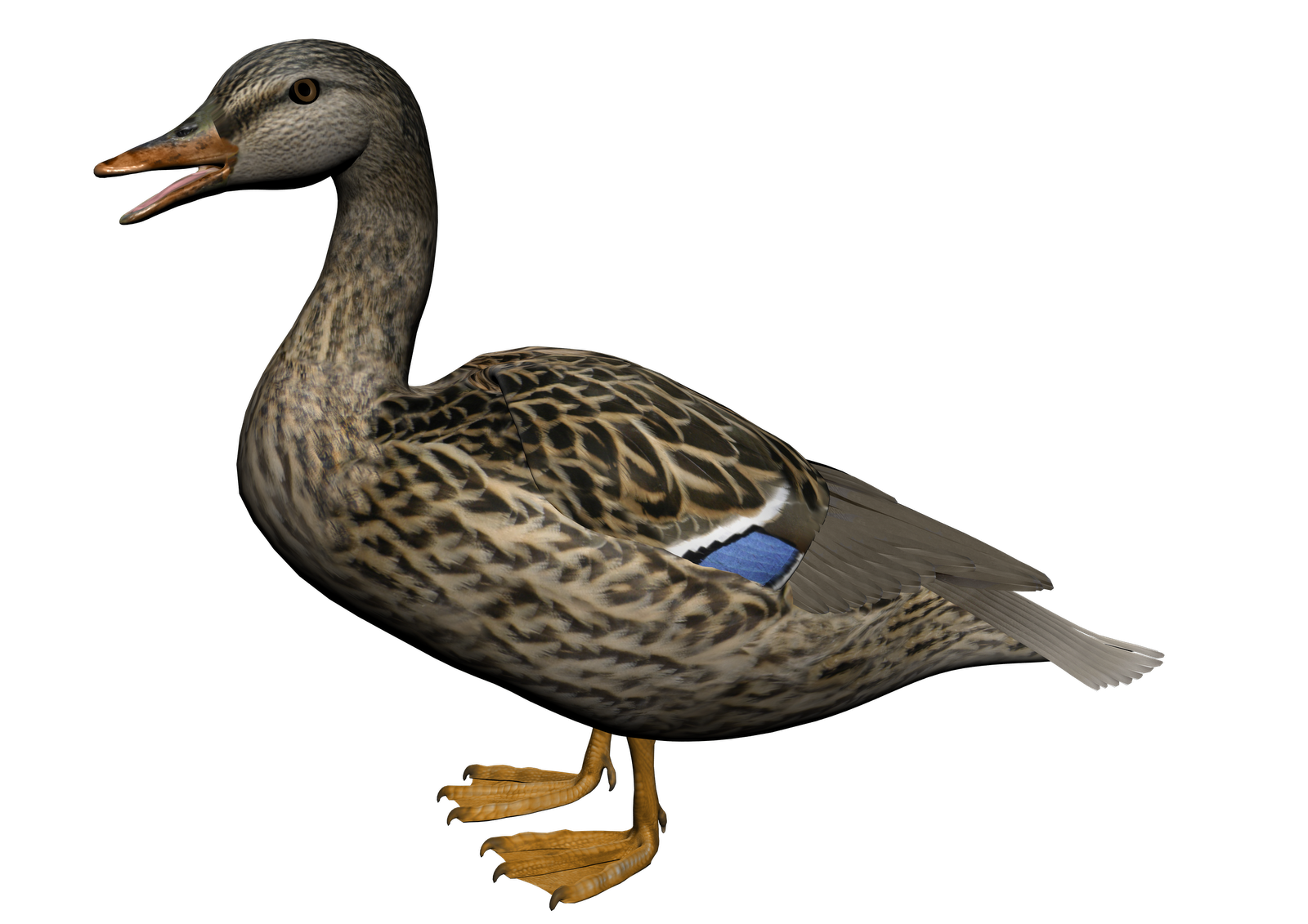 Duck twenty eight isolated. Hunting clipart waterfowl hunting
