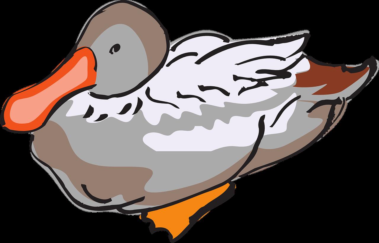 Ducks clipart bird. Domestic duck goose clip
