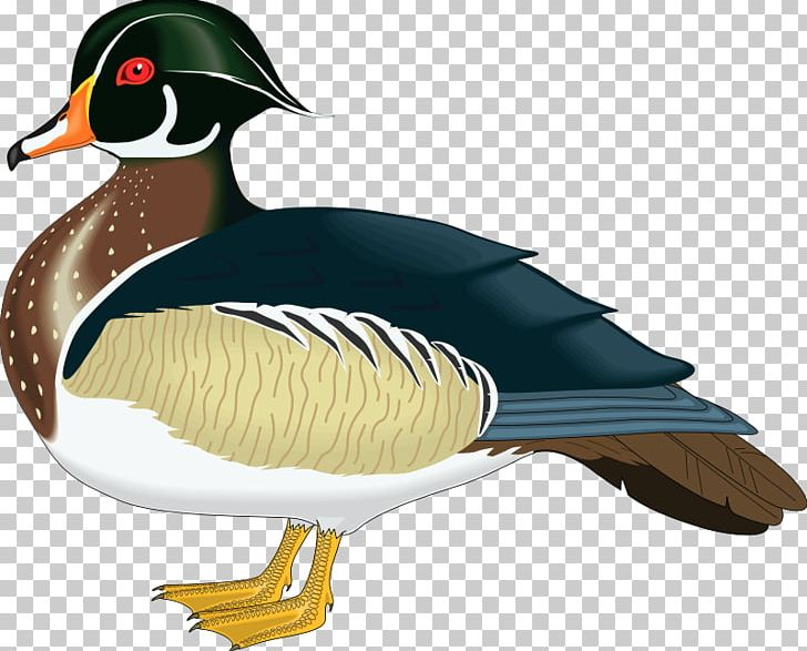 Wood mallard png aix. Ducks clipart mandarin duck